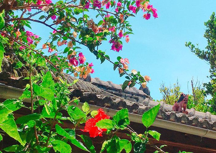 【旅行記】台湾から沖縄旅行に行ってみた(名護・本部シュノーケリング編)